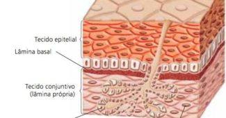 tecido-epitelial