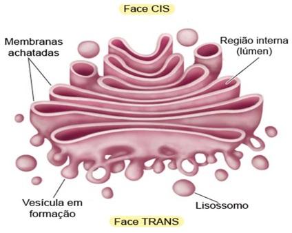 face-cis-trans