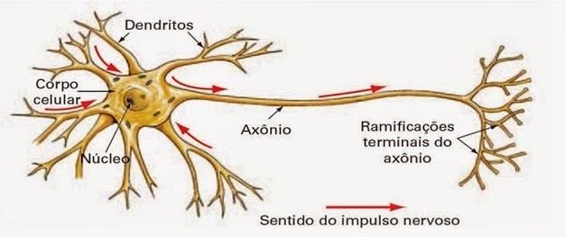 impulso-nervoso