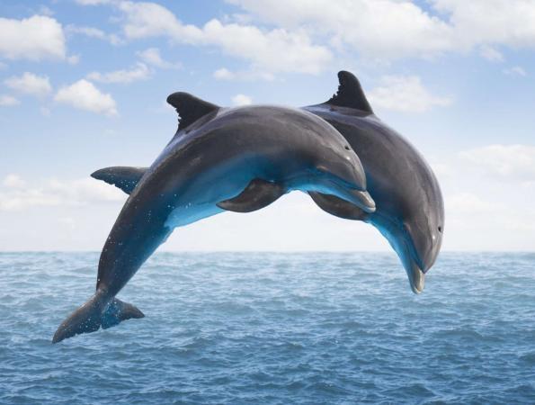 mamiferos-aquaticos-exemplo-golfinhos