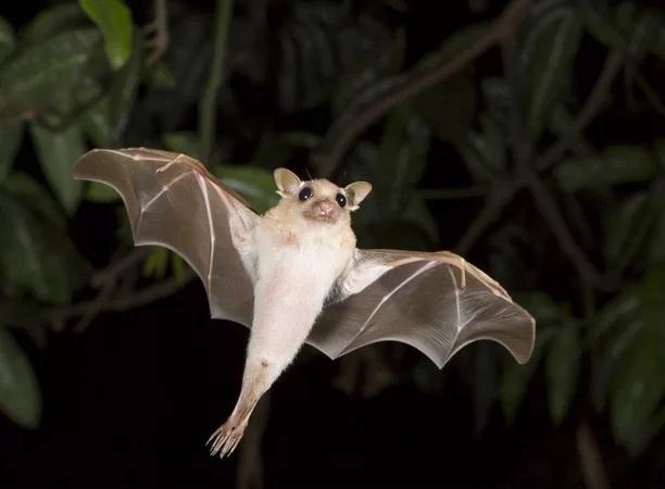 mamiferos-voadores