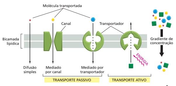 transporte-passivo