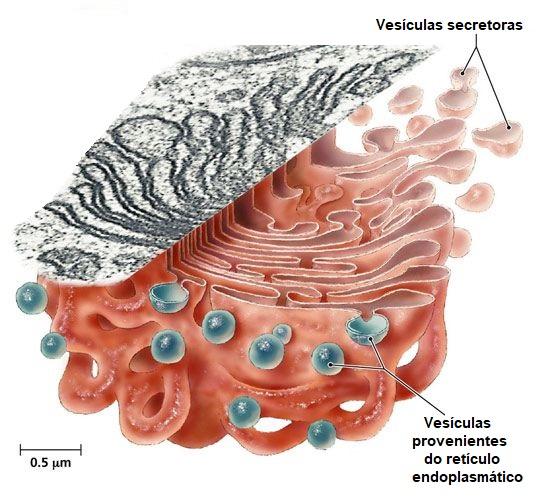 visão-microscópica