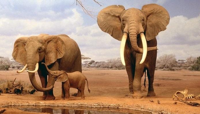 características-do-elefante