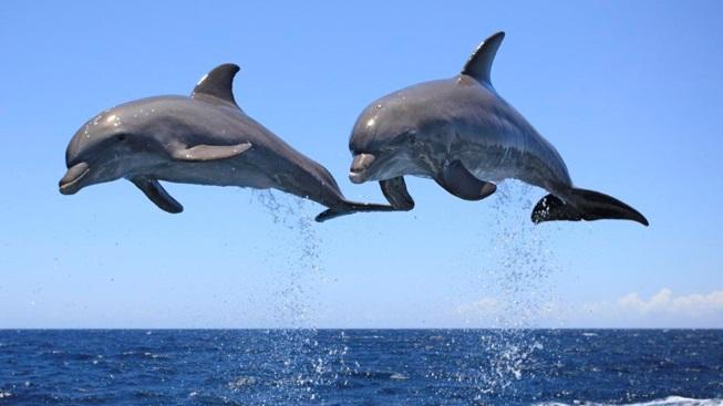 golfinhos-saltando-fora-d´agua