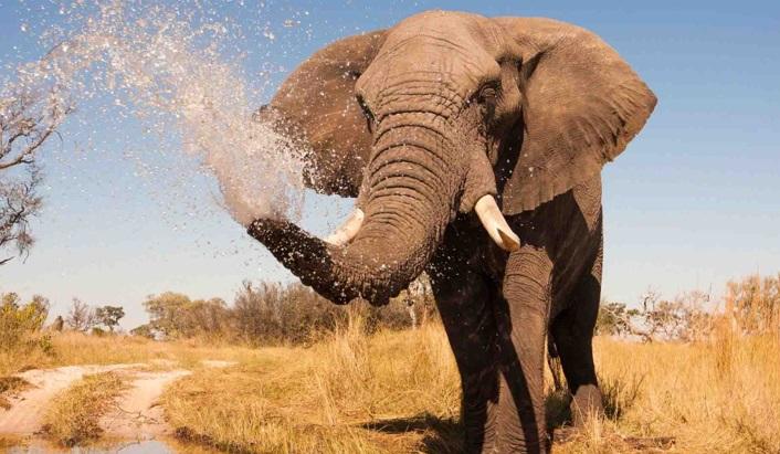 tromba-do-elefante