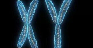 cromossomos-homologos-autossomos