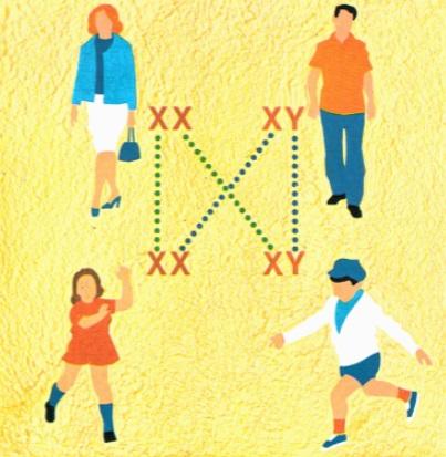 determinação-do-sexo-pelos-cromossomos