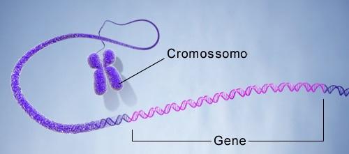 genes-definição-resumo