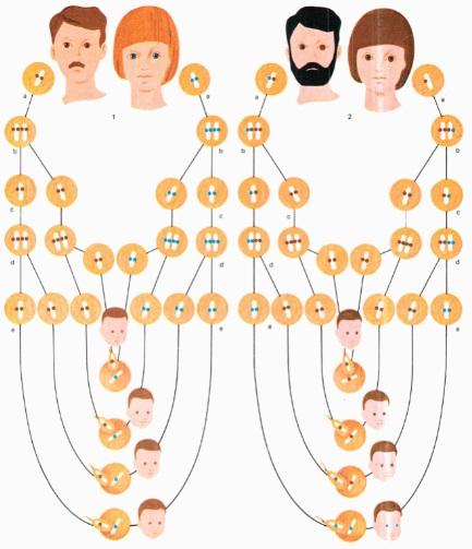 genes-recessivos-e-dominantes