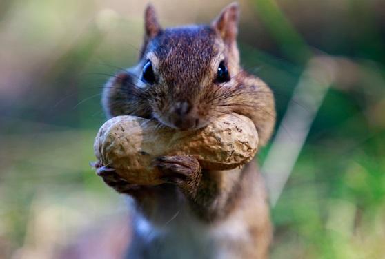alimentação-dos-esquilos