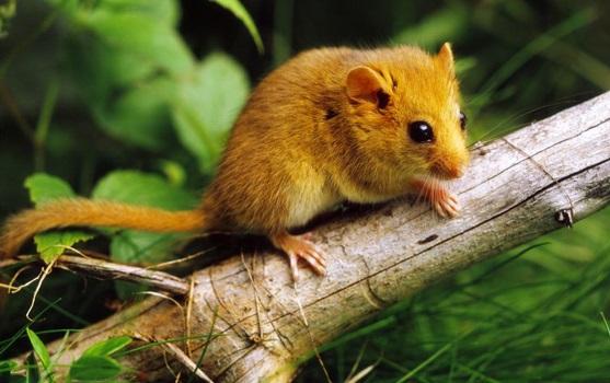 habitat-natural-dos-roedores