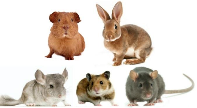 mamiferos-roedores