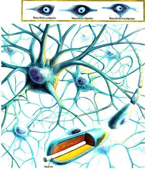 celulas-nervosas