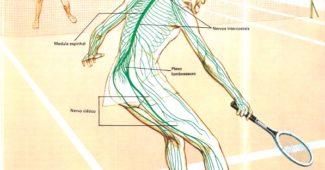 sistema-nervoso-resumo