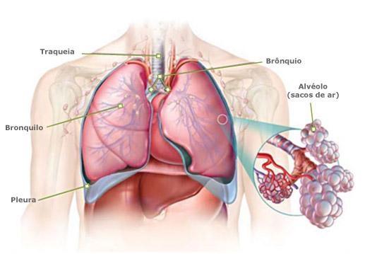 alveolos-pulmonares-respiração
