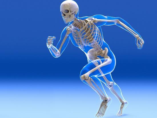 articulações-dos-ossos-do-corpo-humano