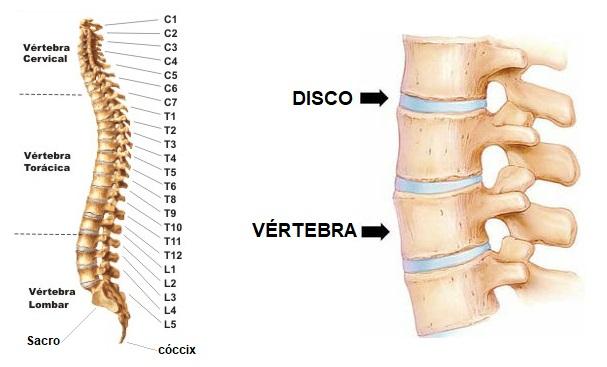 anatomia-da-coluna-vertebral