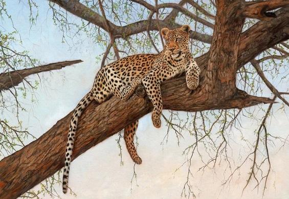 leopardo-curiosidades