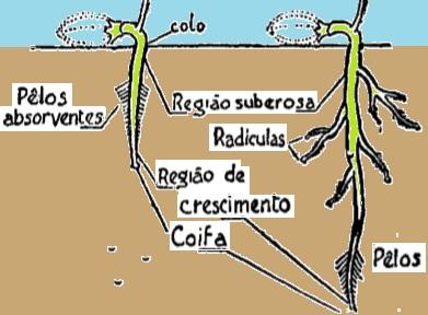 raízes-função