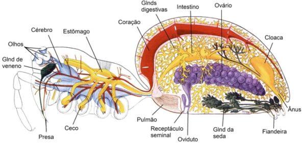 anatomia-de-uma-aranha