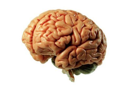 cérebro-humano