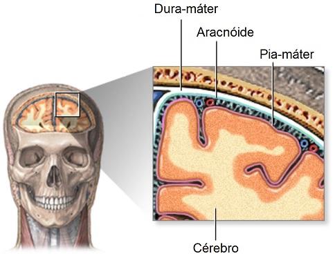 meninges-sistema-nervoso-central