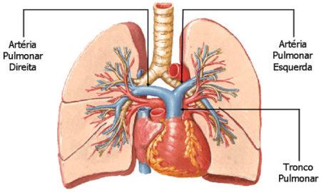 artéria-pulmonar