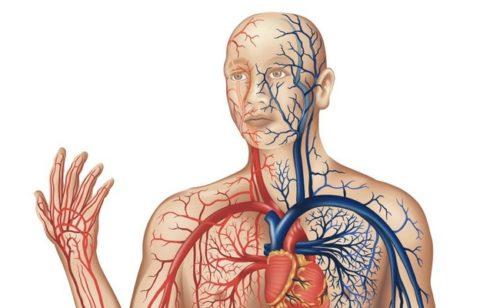 veias-do-sistema-circulatório-humano