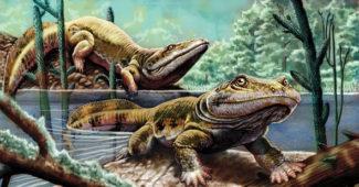 era-paleozoica